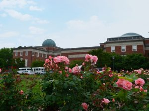 Photo of flowers in front of Morehead building.