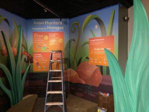 Fungus Hunters exhibit