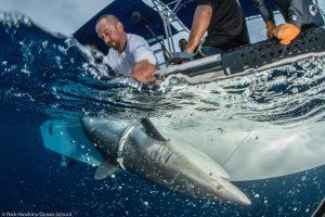 Alex Hearn Shark Research